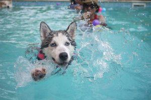 piscine salée