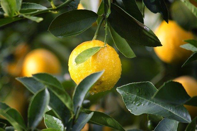 Le citron et ses avantages pour votre santé