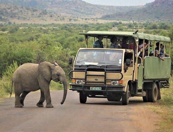 Vacances safari en Afrique du Sud - 3 sites incontournables à visiter